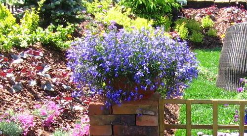 Kwiaty łatwe W Uprawie Ogrodnik Amator Amatorska Uprawa Ogrodu