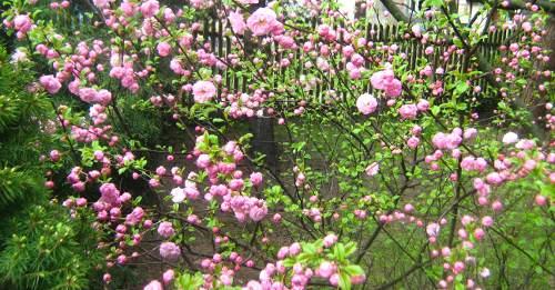 wiosna w ogrodzie, ogród , rośliny do ogrodu kwiecień w ogrodzie kalendarz ogrodnika, ogrodnik-amator.pl
