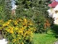 przed płotem, obsadzenie płotu, ogniki, ozdobne owoce, ogrodnik-amator, kompozycje ogrodowe, rabata