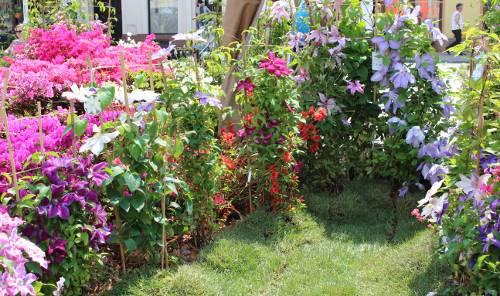lato i wiosna w ogrodzie, kwitnące powojniki, ogród , rośliny do ogrodu, maj w ogrodzie kalendarz ogrodnika, ogrodnik-amator.pl