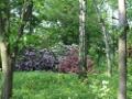 majowa krzewy, rododendrony w cieniu, rododendron, zdjęcia ogrodów, galeria ogrodowa