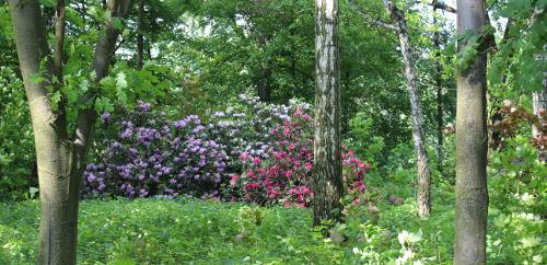 ogród , rośliny do ogrodu maj w ogrodzie kalendarz ogrodnika, ogrodnik-amator.pl