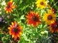 ogrodnik -  ogrodowi twardziele, rośliny na każdą glebę