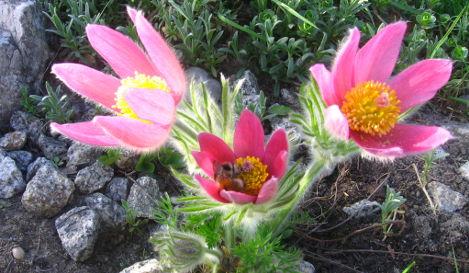 Kwiaty Latwe W Uprawie Ogrodnik Amator Amatorska Uprawa Ogrodu