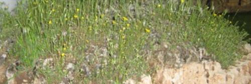 gleba zasadowa, gleba wapienna w ogrodzie