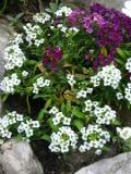 ogród, wysiewy nasion,  wysiewy jesienne