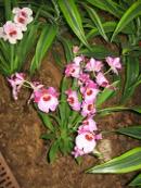 Ogrody, zdjęcia storczyków, uprawa orchideii, pielęgnacja storczyków