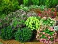 dodatki ogrodowe, kwiaty na balkony i tarasy, kwiaty kwitnące, surfinie, aranżacje ogrodowa, galeria ogrodowa