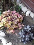 ogród kwiaty ogrodowe , byliny,  kwiaty na jesień i zimę