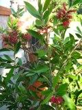 Kuflik, zdjęcia roślin
