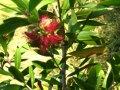 ogrodowe oryginały, dziwne rośliny
