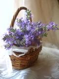 ogrodnik -  rośliny pachnące