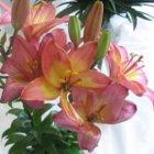 rośliny do letniegp ogrodu, rośliny na lato, ogrodnik, ogród, lato w ogrodzie, letnie kwiaty, letnie rośliny, kwiaty jednoroczne, ogród latem, kalendarz ogrodnika