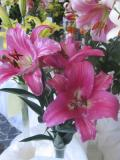 lilie, uprawa lilii