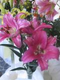 lilia mieszaniec orienpet