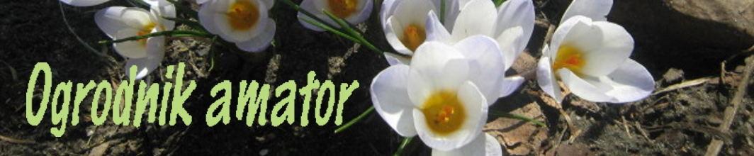 ogrodnik-amator