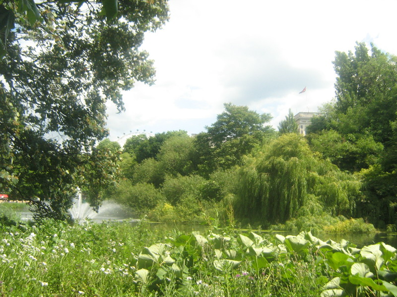 ogród angielski, style ogrodowe, drzewa, woda, łąka, urządzanie ogrodu, aranżacje z roślin, galeria ogrodowa