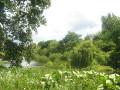 ogród angielski, style ogrodowe, drzewa, woda, rośliny łąkowe, urządzanie ogrodu, aranżacje z roślin, galeria ogrodowa