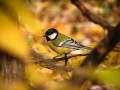 ekologiczny ogród, naturalne uprawy, dokarmianie ptaków zimą