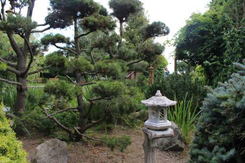 ogród japoński w ogrodzie Botanicznym w Łodzi , ogrody ogrody tematyczne Hortulus, urządzanie ogrodu, aranżacje z roślin, galeria ogrodowa