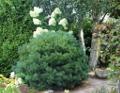 ogrodnik -  ogród angielski, ogrody w stylu angielskim
