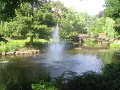 ogród , taras, złocienie, chryzantemy rośliny do ogrodu listopad w ogrodzie kalendarz ogrodnika, ogrodnik-amator.pl, środek jesieni, rośliny do ogrodu, listopadowy ogrod,  w ogrodzie kalendarz ogrodnika, ogrodnik-amator.pl