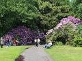 rożnaeczniki, rododendrony, dodatki ogrodowe, wysokie krzewy, krzewy kwitnące, forsycja, aranżacje ogrodowa, galeria ogrodowa