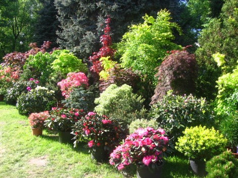 Ogrodnik Amator Uprawa Ogrodu Galeria Ogrodowa Zdjęcia