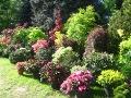 urządzanie  ogrodu, ogród z drzewami i krzewami ozdobnymi,  ogród, pomysł na ogród ogrodu, aranżacje z roślin, galeria ogrodowa