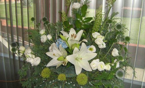 ogród , rośliny do ogrodu czerwiec i lipiec w ogrodzie kalendarz ogrodnika, ogrodnik-amator.pl