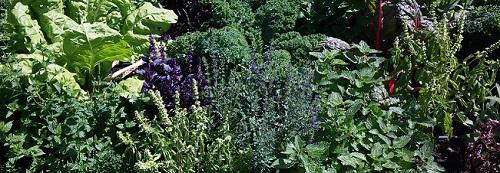 Ogrody, wysiewy, sąsiedztwo roślin