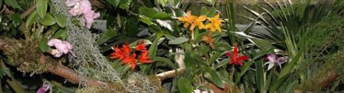 zdjęcia storczyków, uprawa orchideii, pielęgnacja storczyków, rosliny pokojowe, storczyki, kwiaty w domu, kwiaty domowe
