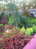 ogrodnik -  rośliny o ozdobnych pędach, owocach i liściach